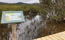 Mangrove board walk paihia.jpg